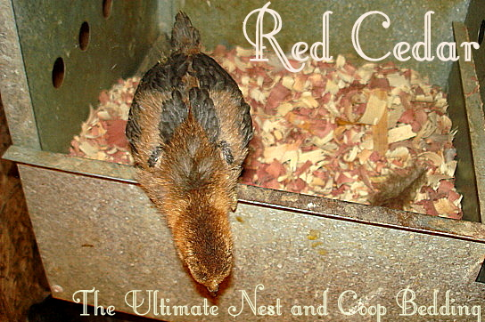 Red Cedar Message Board ~ Red cedar moonlight mile herb farm